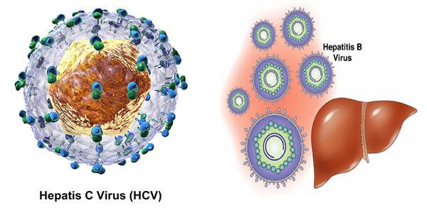 Сколько живет гепатит С