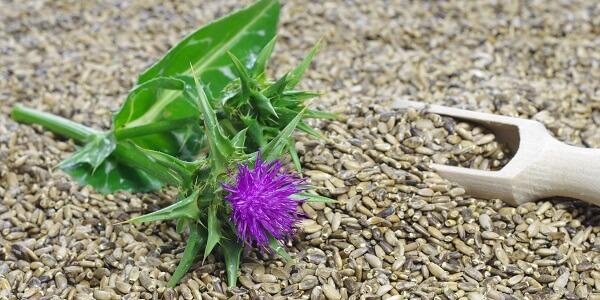 Семя расторопши при гепатите с thumbnail