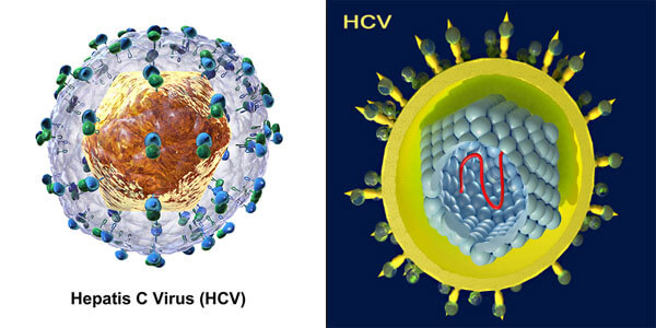 Hepatis C Virus